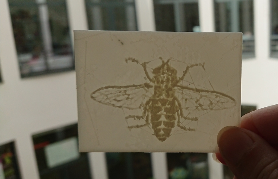 Lithophanie insecte gravure